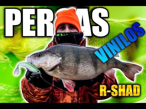 Pescando PERCAS con VINILO R-SHAD 100 ( HART Bloody OFFSHORE EVO LIGHT+GOL-Z)