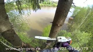 видео как правильно спилить дерево