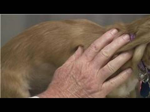 Puppy Care : How To  Administer A Vaccination To Puppy