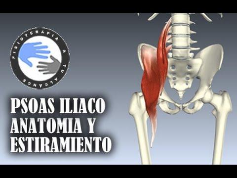 Musculo psoas iliaco, anatomia y estiramientos - YouTube