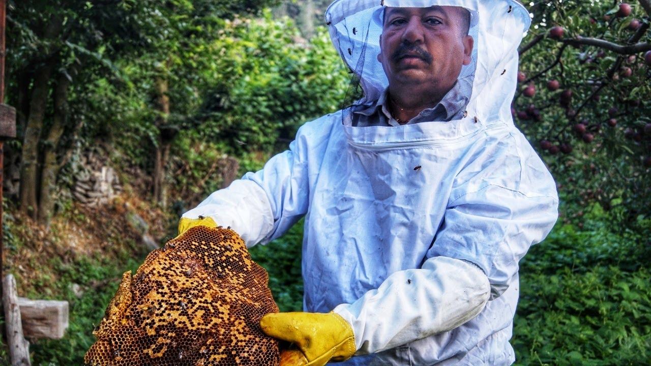 ||Honey Harvesting In Kinnaur HP ||