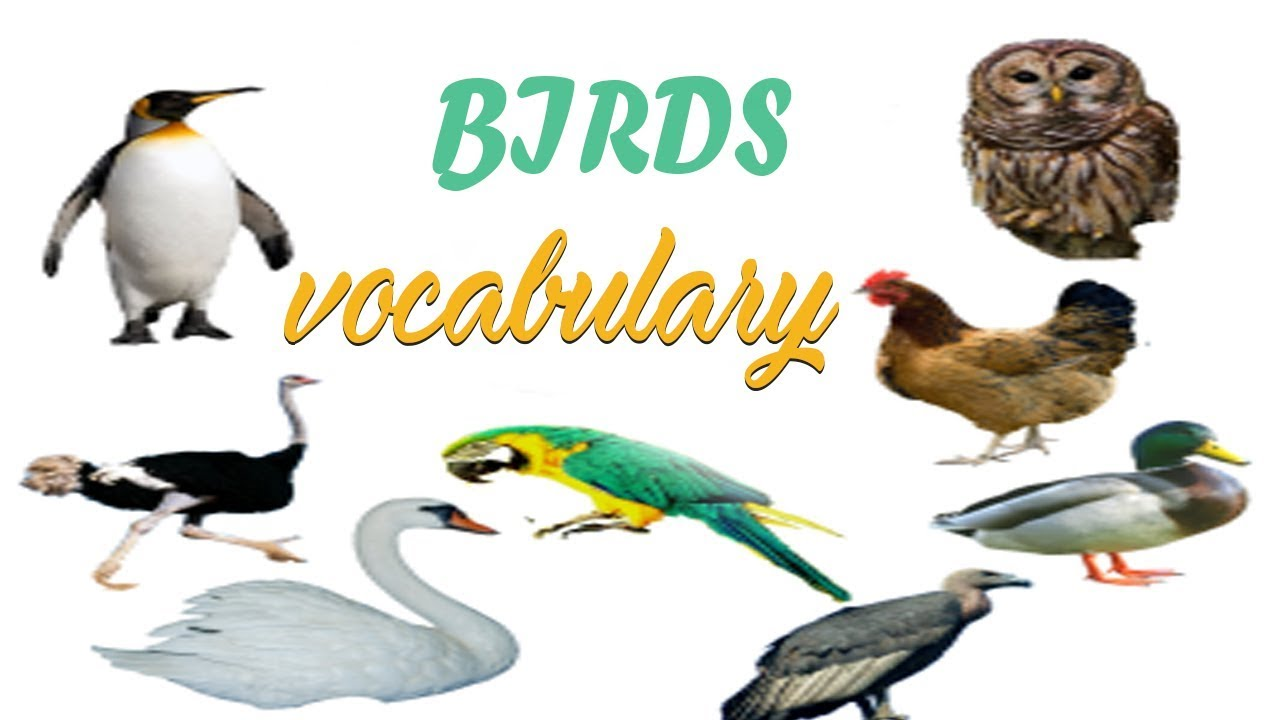"""essay on birds for kids in english Published by experts share your essayscom is the home of thousands of essays short essay on """"if i were a bird mistress and some small children of the."""
