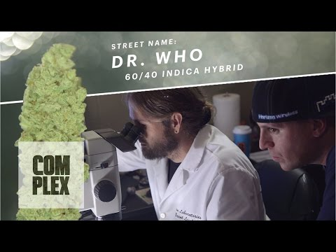 "Motor City High: ""Dr. Who"" Marijuana Strain 