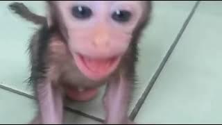 Terrified baby monkey