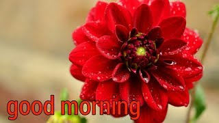 good morning video song for WhatsApp