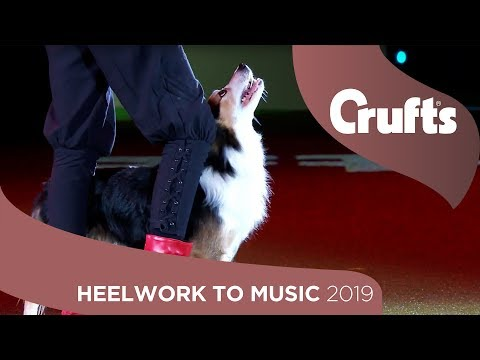 Skiffle The Dog Performs Winning Heelwork To Music Routine | Crufts 2019