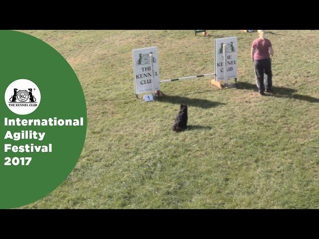 Small Grade 7 Jumping - Part 4 | International Agility Festival 2017