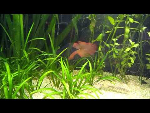 Aquatic Plant Adaptation - Plus a Quick Update