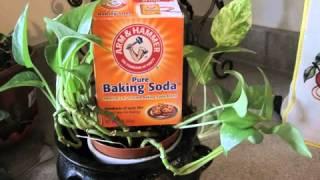 baking soda and molasses cancer protocol   YouTube