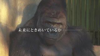 【名古屋市公式】名古屋市職員採用広報映像「集え名古屋へ 輝け人間たちよ!」