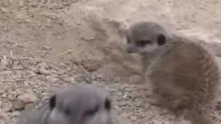 Watch London Zoo