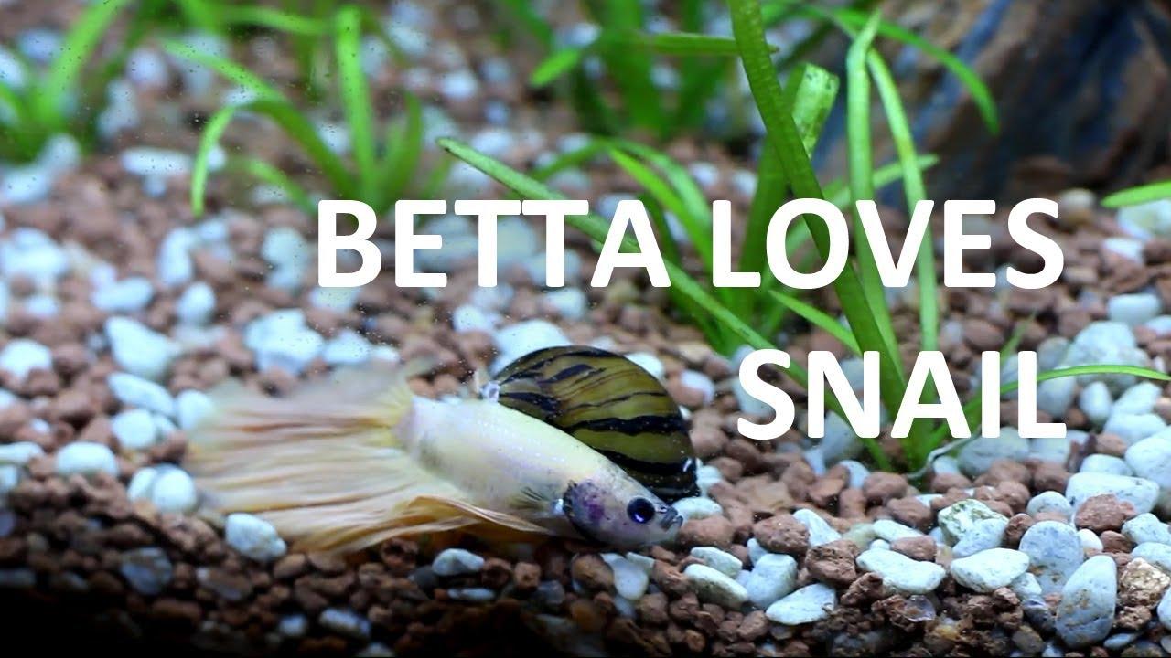 Zebra Nerite Snail Beginner Guide Youtube