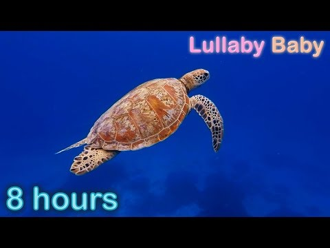 ✰ 8 HOURS ✰ UNDERWATER SOUNDS with MUSIC ♫ SEA TURTLES Swimming ✰ Relaxing Baby Sleep Music