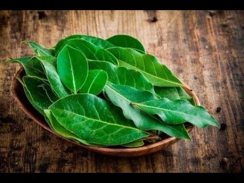 Лавровый лист - мощнейшее средство от гипертонии, диабета, отёков и лишнего веса!