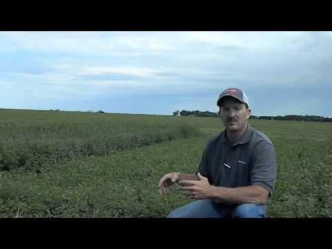 Round-Up Ready Alfalfa vs Conventional with Jeff