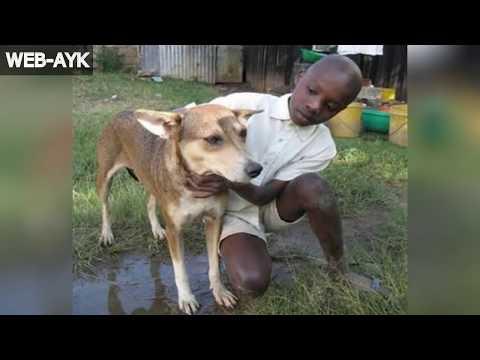 İnsanların Hayatını Kurtaran 8 Hayvan