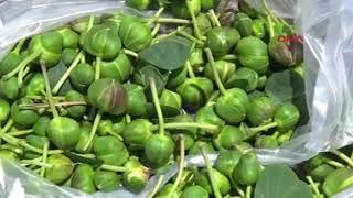 Kapari bitkisi geçim kaynağı oldu