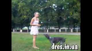 Моя любимая собака Зайка (сам  себе кинолог)