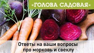 Голова садовая - Ответы на ваши вопросы про морковь и свеклу