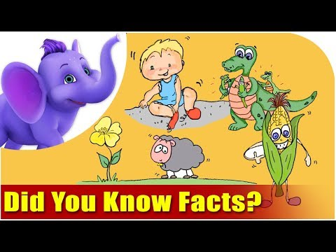 Did You Know Facts?