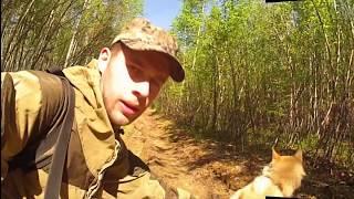 Неудачная охота на медведя с западно-сибирской лайкой!Проверка солонца.Лабаз.