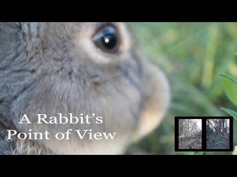 A Rabbit's Point of View | What Rabbits See
