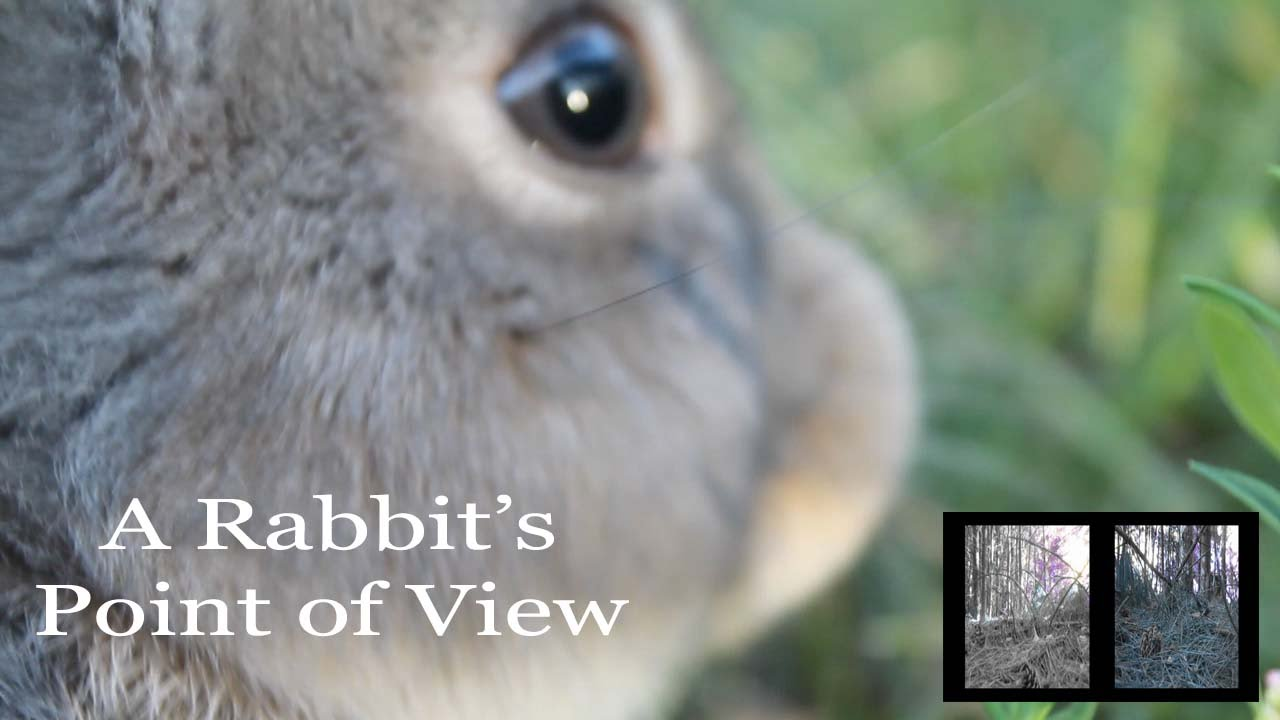 A Rabbit S Point Of View What Rabbits See Youtube