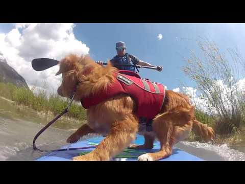 Stand-Up Paddleboard with Puppy!