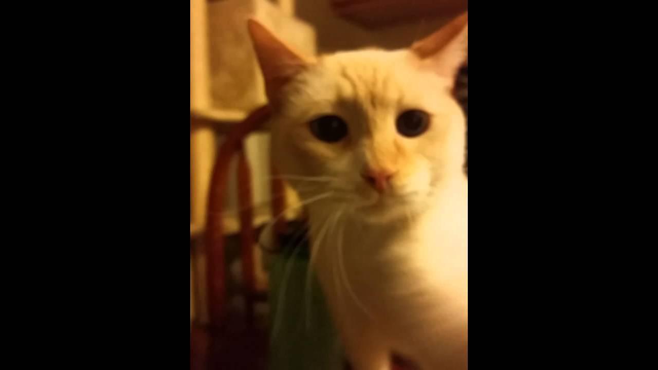 snap cat youtube