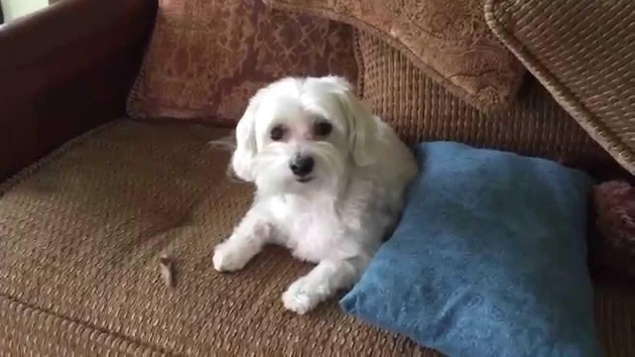 Bad Dog! - YouTube