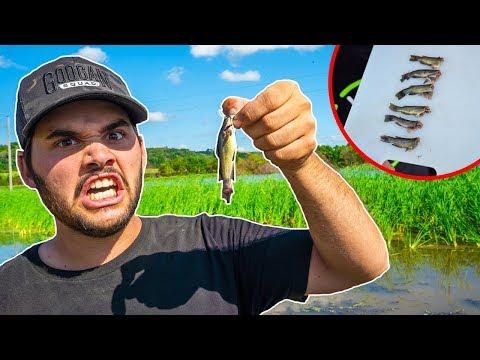 MICRO Catfish CATCH CLEAN COOK!!! (Surprising Result!)