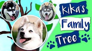 Kika's Klee Kai Family Tree  Where It All Began!
