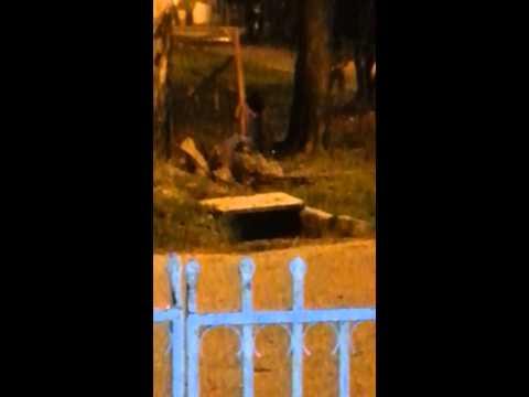 Aparece Fantasma en formosa (barrio fleming)