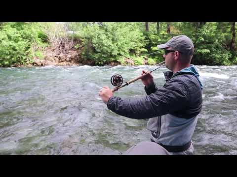 Upper McKenzie River Fishing Report