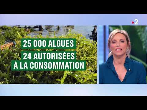 Complexe spiruline, Complément Alimentaire - Fleurance ... - Guide