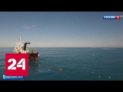 Запасов креветки, выловленной в Баренцевом море, хватит минимум на 2 года - Россия 24