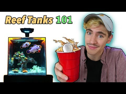 How to Keep a Reef Tank at College! - (Q&A)