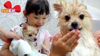 귀여운 강아지 뽀뽀 목욕시키키 애완견 키우기 목욕놀이 To have a dog bus | LimeTube & Toy 라임튜브