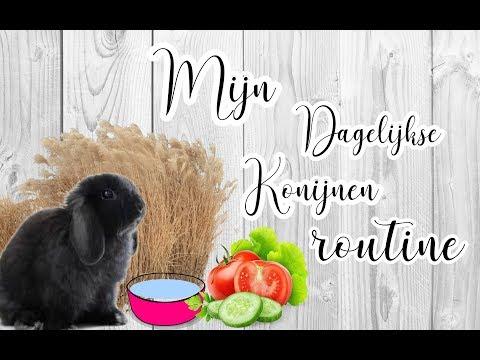 Mijn Dagelijkse konijnen routine/ Dailey Bunny Care Routine BUNNBUNN
