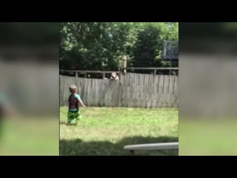 Boys play catch with neighbor's dog over fence