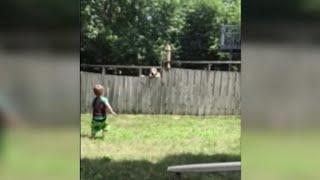 Boys play catch with neighbor's dog over fence