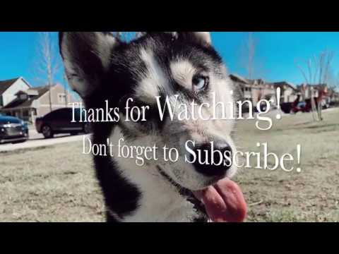 Monday Ruffies funny dog compilation