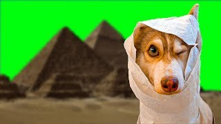 Я - МУМИЯ!! (Хаски Бублик) Говорящая собака Mister Booble дрессировка хаски