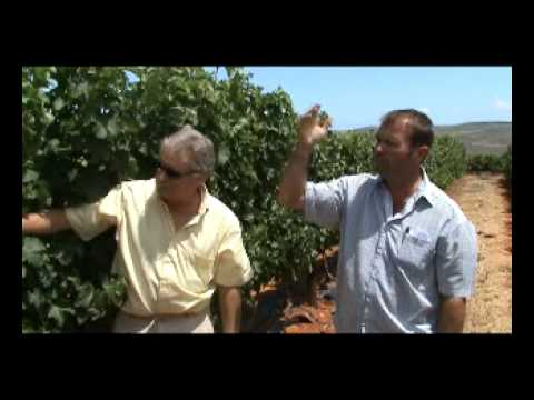 Fairview South African Sauvignon Blanc from Darling Vid1