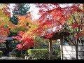 20171117平林寺の紅葉2017【HD・原画4K】