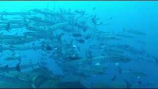 Plongée en Papouasie Nouvelle Guinée  Walindi