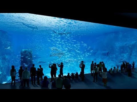 Nausicaa - Boulogne sur mer - France - Le plus grand aquarium d'Europe