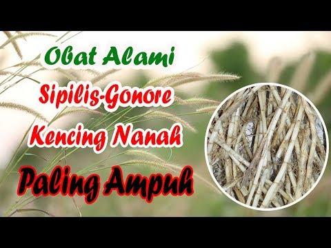 akar-alang-alang-obat-alami-sipilis-gonore-kencing-nanah