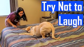 Compilation of My Labrador Puppy Playing and Enjoying But Seriously Who Plays Like This?