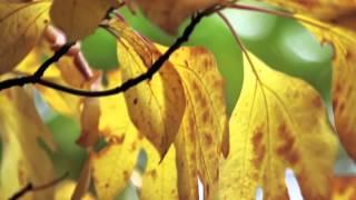Amar bela je jai sanjh bela te | Tagore Song | piano | Instrumental